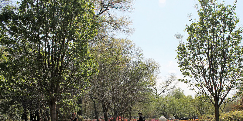 Daylilies & Alkaline Soil