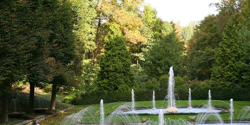 The best way to Prune Variegated Schefflera Arboricola