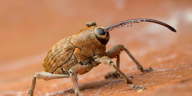 Bid Usher In the Good and Garden Bugs Goodbye